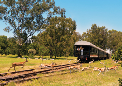 Rovos Rail Safari Golfreis